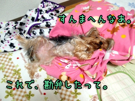 2_20091127185539.jpg