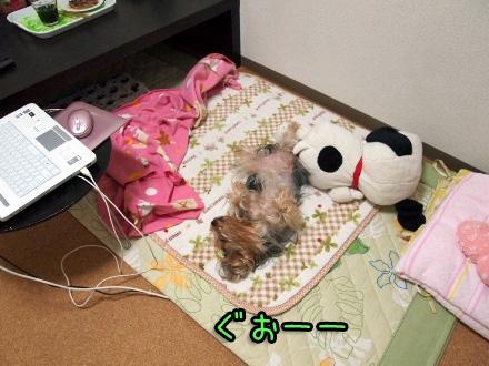 2_20091209190602.jpg