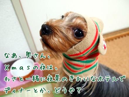2_20091210200147.jpg