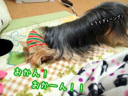 2_20091211162847.jpg
