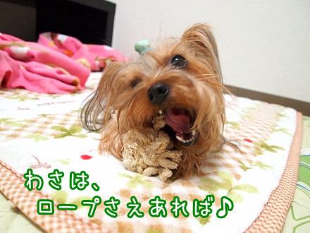 2_20091216194845.jpg