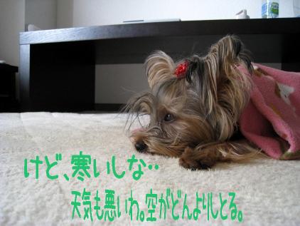 3_20090109195355.jpg