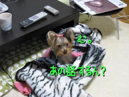 3_20090113195201.jpg