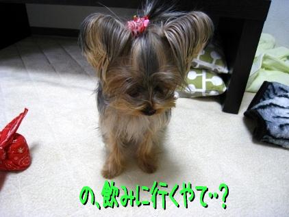 3_20090121124900.jpg