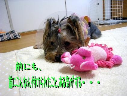 3_20090124191737.jpg