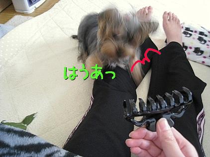 3_20090217192504.jpg