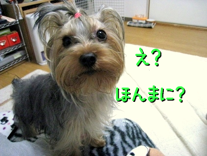 3_20090225132914.jpg