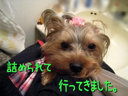 3_20090301113830.jpg