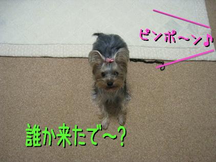 3_20090304142843.jpg