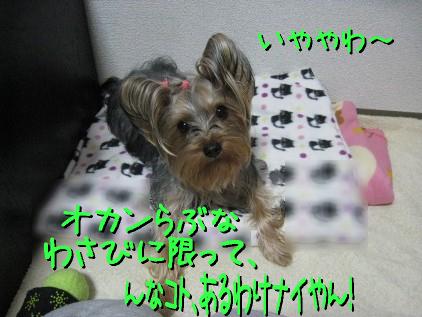 3_20090313160759.jpg