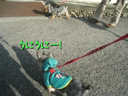 3_20090320172446.jpg