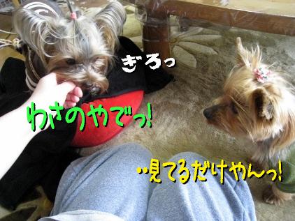3_20090325145449.jpg