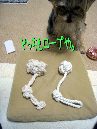 3_20090329174323.jpg