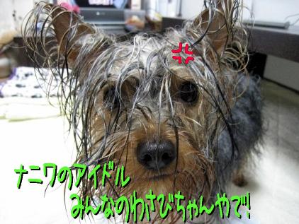 3_20090404190735.jpg