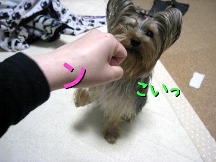 3_20090407202728.jpg