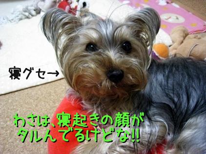 3_20090414200524.jpg