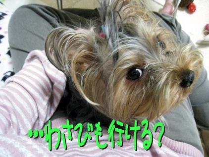 3_20090419190307.jpg