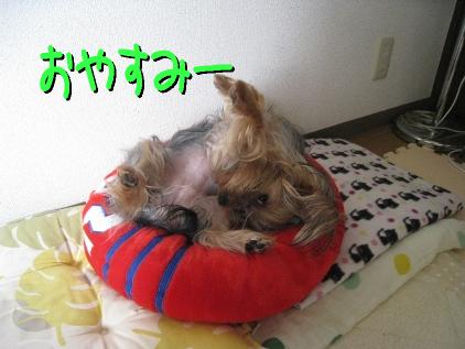3_20090425195310.jpg