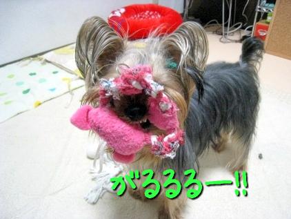 3_20090504215638.jpg