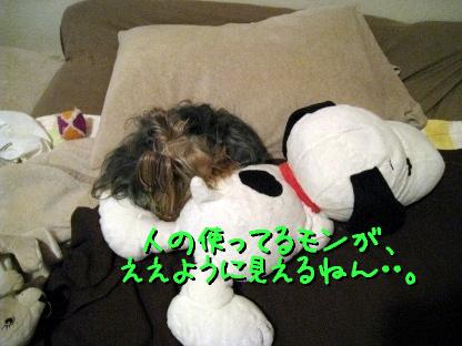 3_20090515185822.jpg