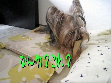 3_20090524153102.jpg
