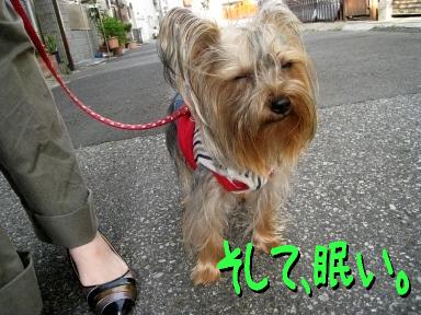 3_20090527091745.jpg