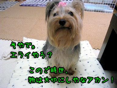 3_20090604185646.jpg
