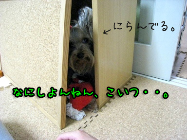 3_20090605202229.jpg