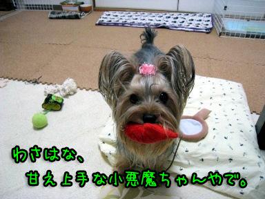 3_20090607144103.jpg