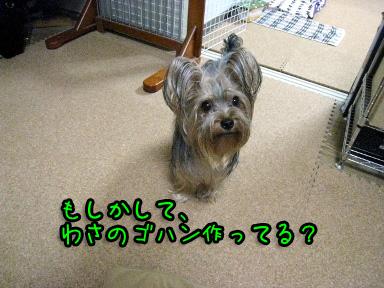 3_20090608191829.jpg