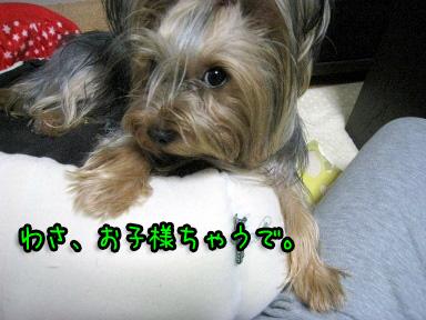 3_20090612172207.jpg
