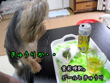 3_20090613183541.jpg
