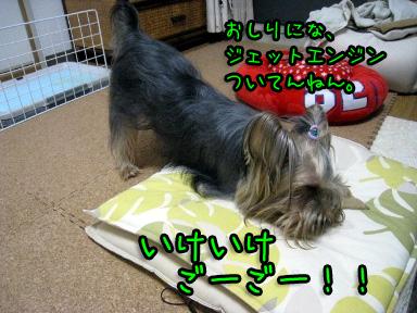 3_20090616192054.jpg