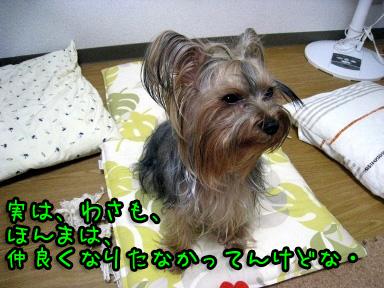 3_20090618175325.jpg