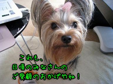 3_20090625202548.jpg