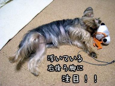 3_20090626195202.jpg