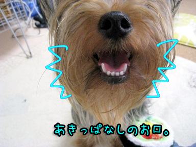 3_20090628122451.jpg