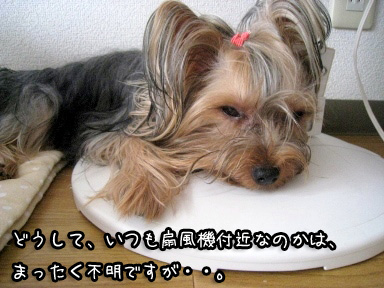 3_20090702194705.jpg
