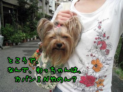 3_20090711190604.jpg