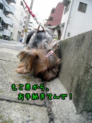 3_20090719193350.jpg