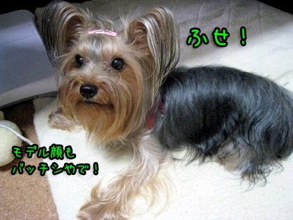 3_20090726125250.jpg