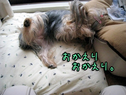 3_20090731145424.jpg