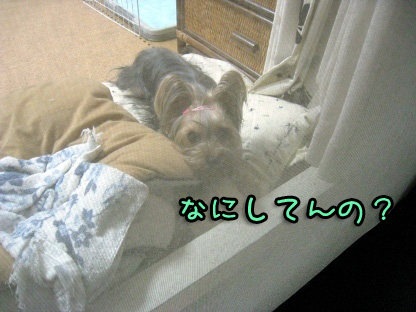 3_20090801204257.jpg