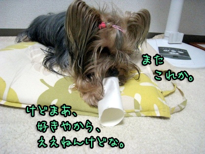 3_20090803151825.jpg