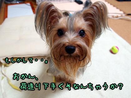 3_20090811160807.jpg