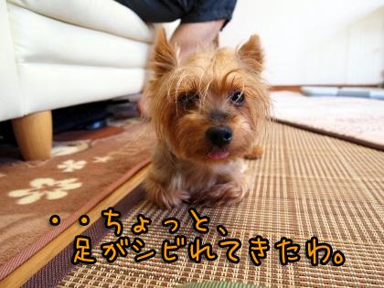 3_20090812204448.jpg