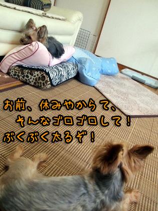3_20090813183420.jpg