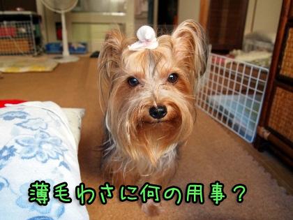 3_20090824201259.jpg