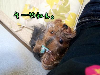 3_20090825192540.jpg