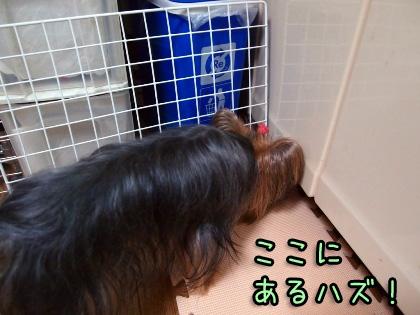 3_20090915193539.jpg